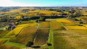 vignoble bordelais côte de bourg 46° Nord